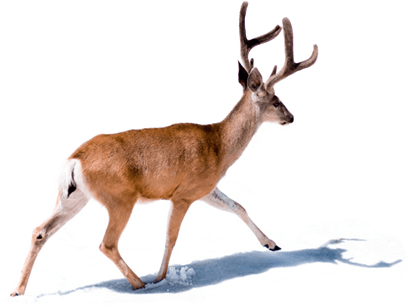 Empreinte naturelle dans la neige